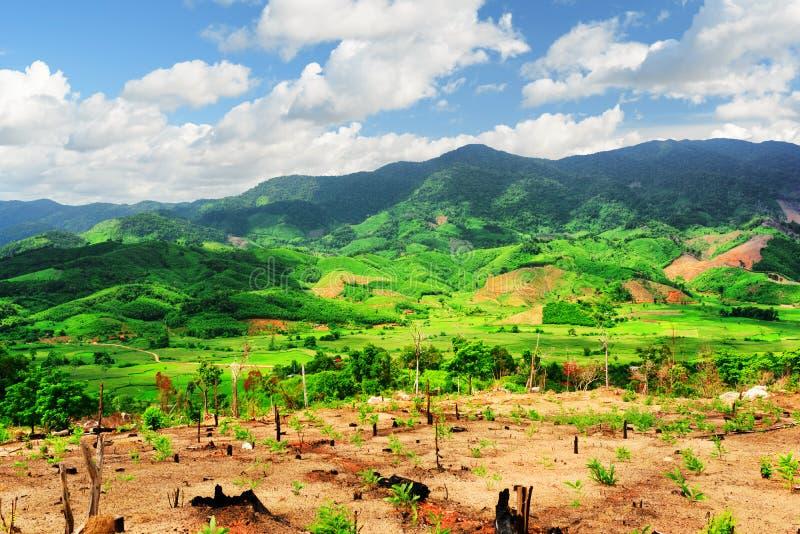 Ideia cênico de montanhas surpreendentes e de campos verde-claro do arroz fotografia de stock royalty free