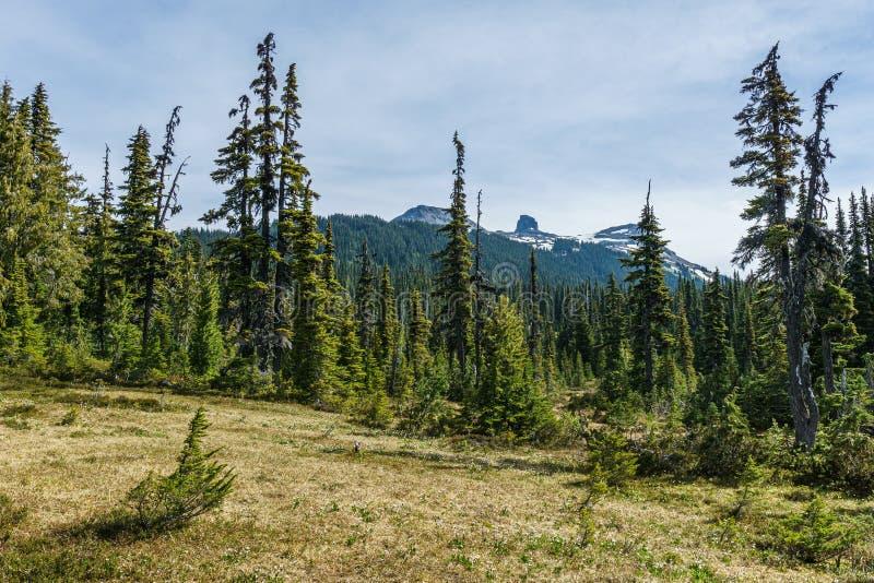 Ideia cênico do medow verde com manhã preta distante do verão da montanha da presa no parque provincial Canadá do garibaldi imagem de stock royalty free