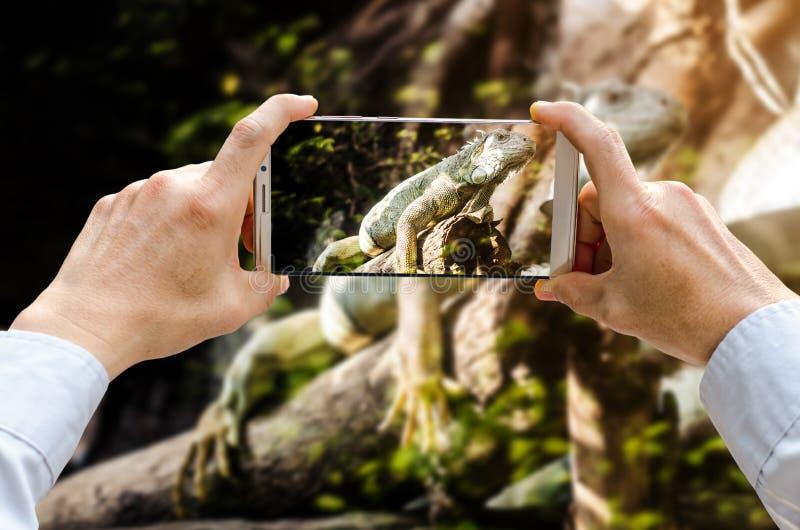 A ideia colhida do tiro do ` s do homem entrega a fatura da foto no telefone celular fotos de stock royalty free