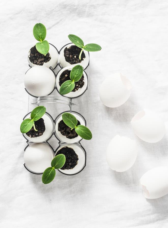 Ideia criativa de plântulas do pepino em um shell de ovo em um fundo claro, vista superior Vegetais de jardinagem imagens de stock royalty free
