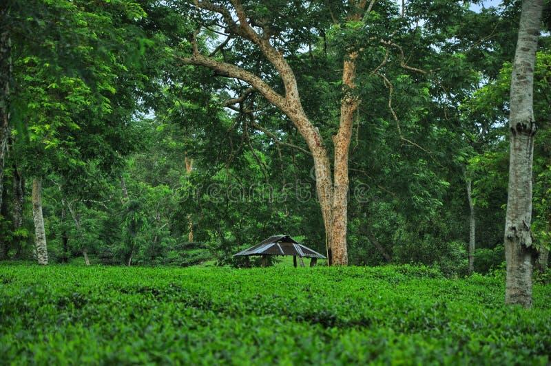 Ideia da beleza do jardim de chá imagem de stock royalty free