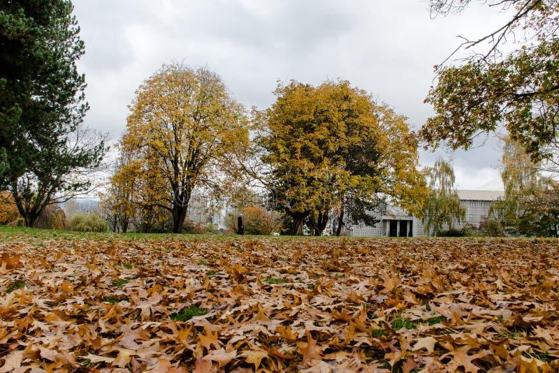 Ideia da cena do inverno em Stanley Park fotos de stock royalty free