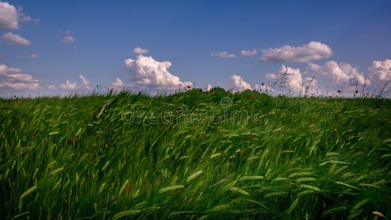 Ideia da paisagem de um campo verde da agricultura com céu azul e as nuvens brancas foto de stock