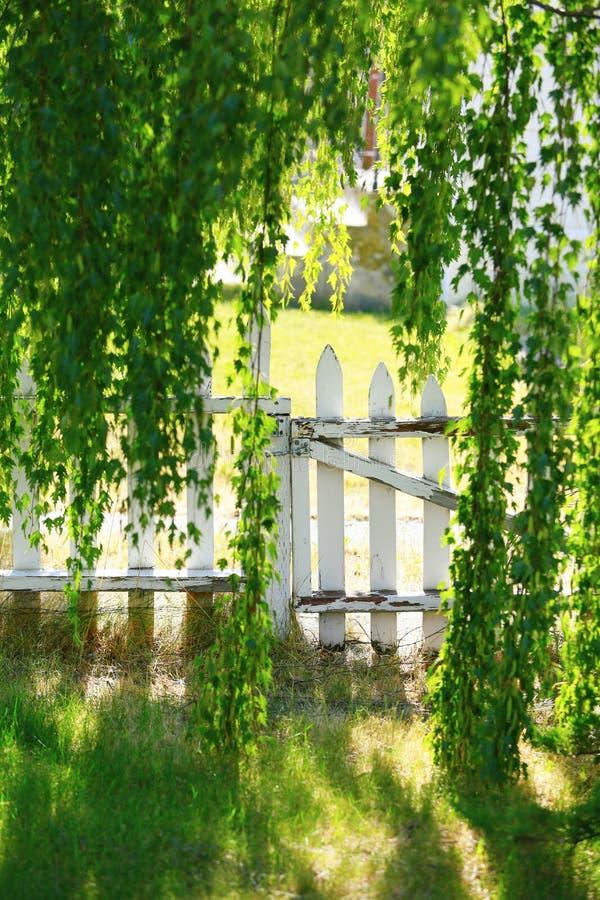Ideia da porta de madeira branca através dos ramos do vidoeiro fotos de stock royalty free