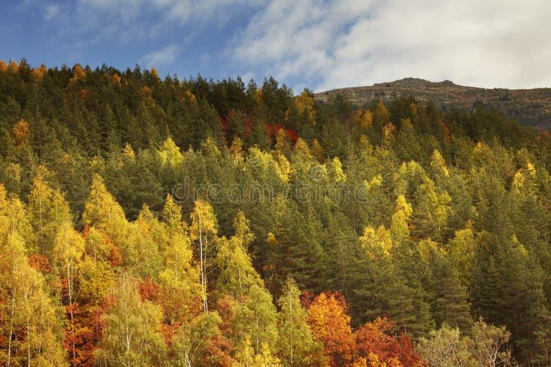 Ideia da queda da montanha do outono em Bulgária, Vitosha fotografia de stock royalty free