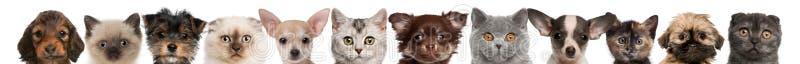 Ideia das cabeças do filhote de cachorro e do gatinho fotografia de stock royalty free