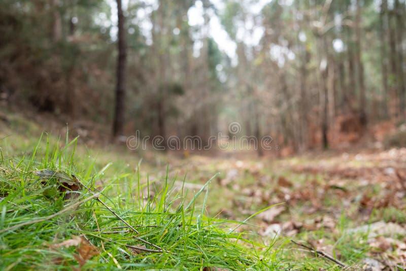Ideia de baixo ângulo de um fundo de Defocus da floresta do outono fotos de stock royalty free