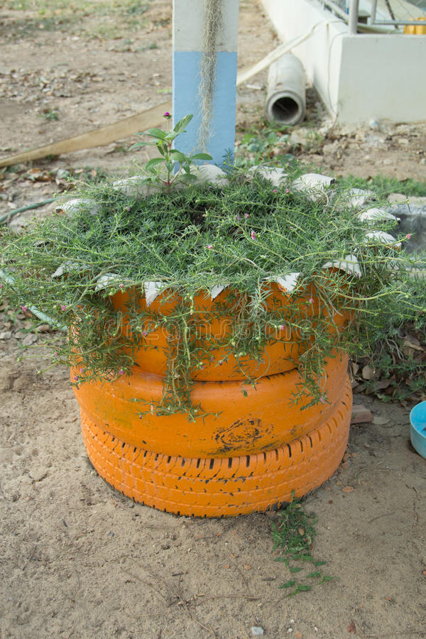 Ideia de DIY reciclar do pneu usado com flores ou planta na borracha velha foto de stock royalty free