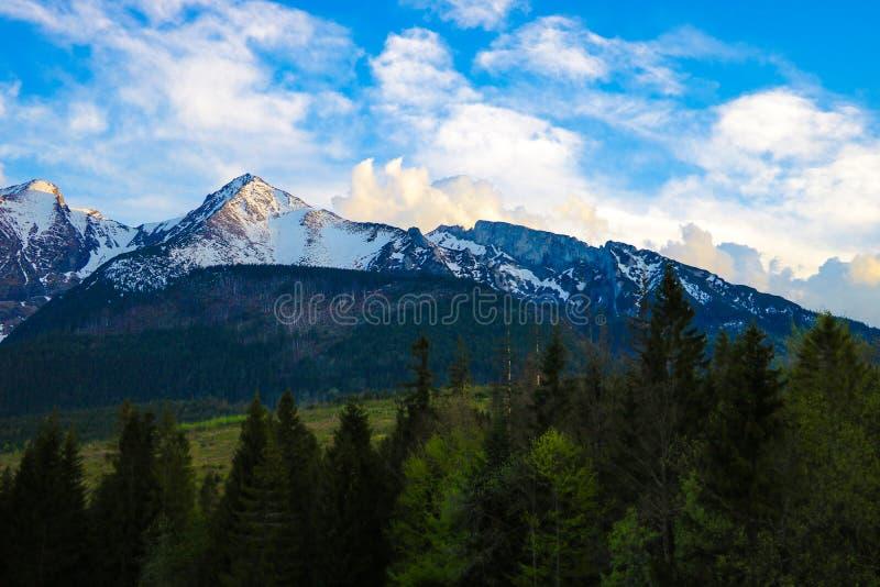 Ideia de mounains de Tatra Montanhas de Tatra na manh? fotos de stock