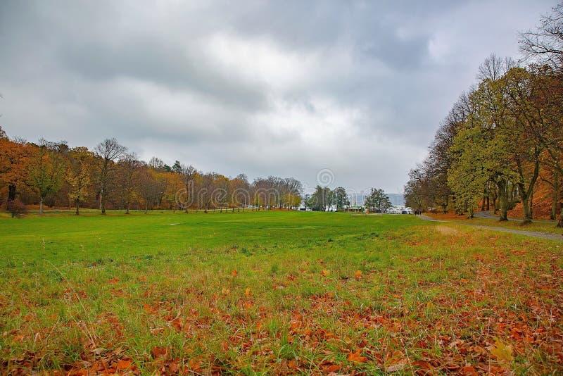 Ideia de surpresa da paisagem do outono Folhas caídas alaranjadas amarelas como o sinal da queda Parque/floresta/exterior imagem de stock royalty free