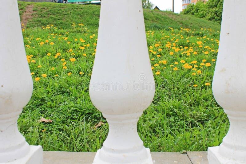 Ideia do campo com tulipas amarelas e grama verde através da balaustrada branca velha foto de stock royalty free