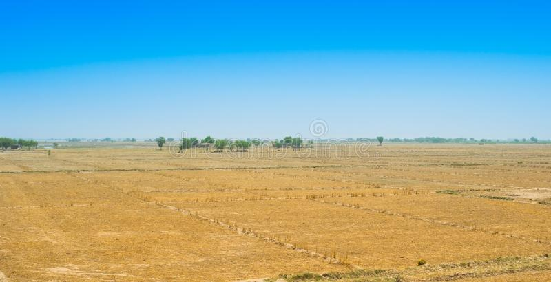 Ideia do campo de trigo após a colheita no rahim khan yar, Paquistão foto de stock royalty free