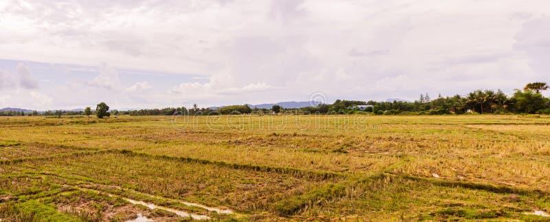 Ideia do panorama do campo vazio do arroz em rural de Tail?ndia fotografia de stock royalty free