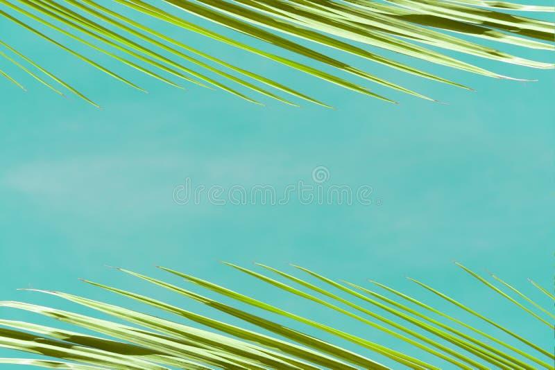 Ideia dos ramos das palmeiras contra o c?u azul imagem de stock royalty free