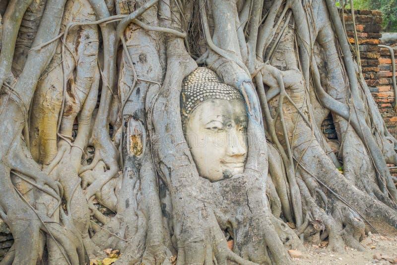 Ideia exterior da cabeça da Buda coberto de vegetação pela árvore de figo em Wat Mahathat Parque histórico de Ayutthaya imagens de stock royalty free