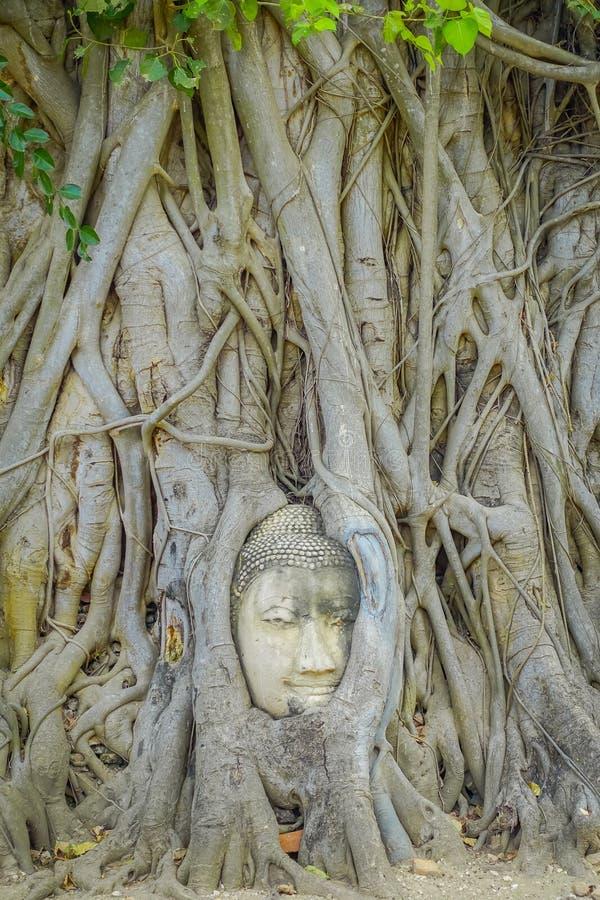 Ideia exterior da cabeça da Buda coberto de vegetação pela árvore de figo em Wat Mahathat Parque histórico de Ayutthaya imagens de stock