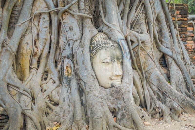 Ideia exterior da cabeça da Buda coberto de vegetação pela árvore de figo em Wat Mahathat Parque histórico de Ayutthaya fotografia de stock royalty free