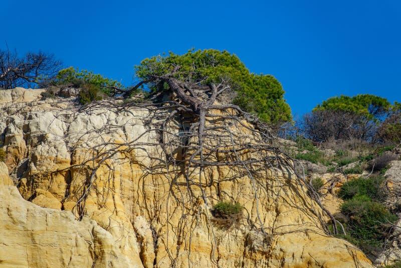 Ideia inferior de raizes do pinheiro após o landside fotografia de stock royalty free