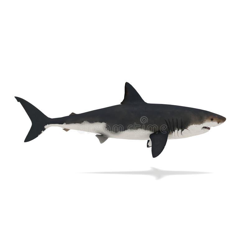 Ideia lateral da rendição do tubarão 3d ilustração stock