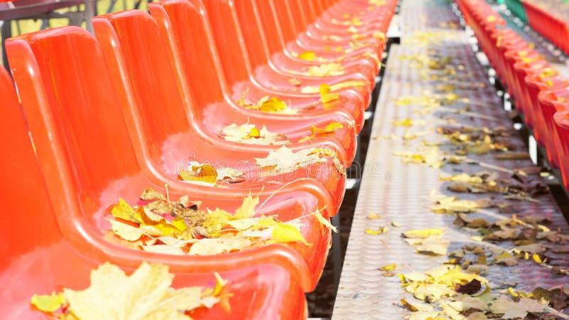 Ideia lateral das fileiras de cadeiras da cor vermelha com as folhas de outono amarelas nelas imagens de stock
