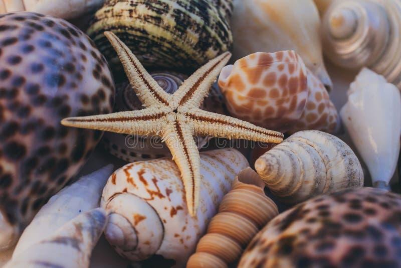 Ideia macro do fundo da concha do mar Estrela do mar no fundo dos seashells Muitas conchas do mar diferentes textura e fundo fotografia de stock