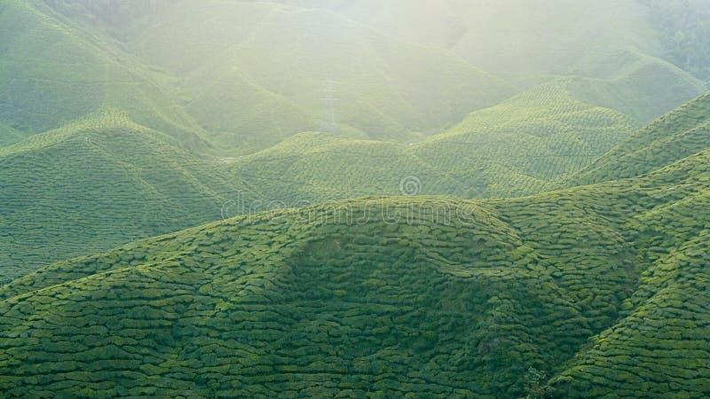 Ideia majestosa da paisagem da plantação de chá de Cameron Highlands Pahang Malaysia Fundo ou contexto da natureza ou da agricult imagens de stock