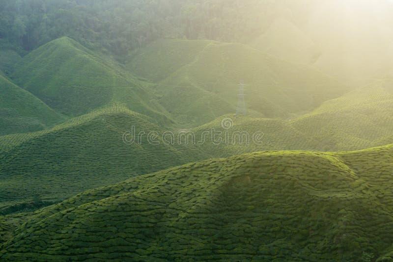 Ideia majestosa da paisagem da plantação de chá de Cameron Highlands Pahang Malaysia Fundo ou contexto da natureza ou da agricult fotos de stock royalty free