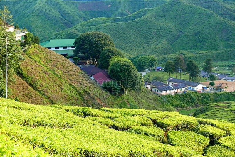 Ideia majestosa da paisagem da plantação de chá de Cameron Highlands Pahang Malaysia Fundo ou contexto da natureza ou da agricult imagens de stock royalty free