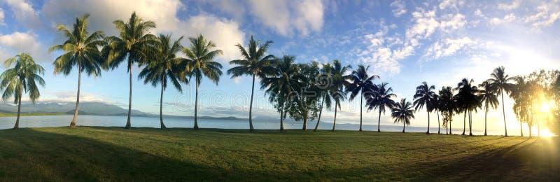 Ideia panorâmico da paisagem de uma fileira das palmeiras em Port Douglas imagem de stock royalty free