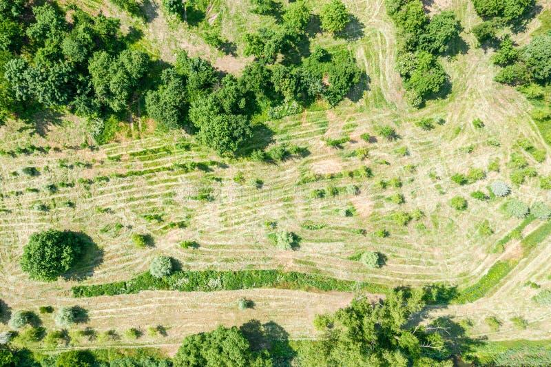 Ideia superior aérea da paisagem do parque com as árvores verdes frescas espessas e para cortar o gramado imagens de stock