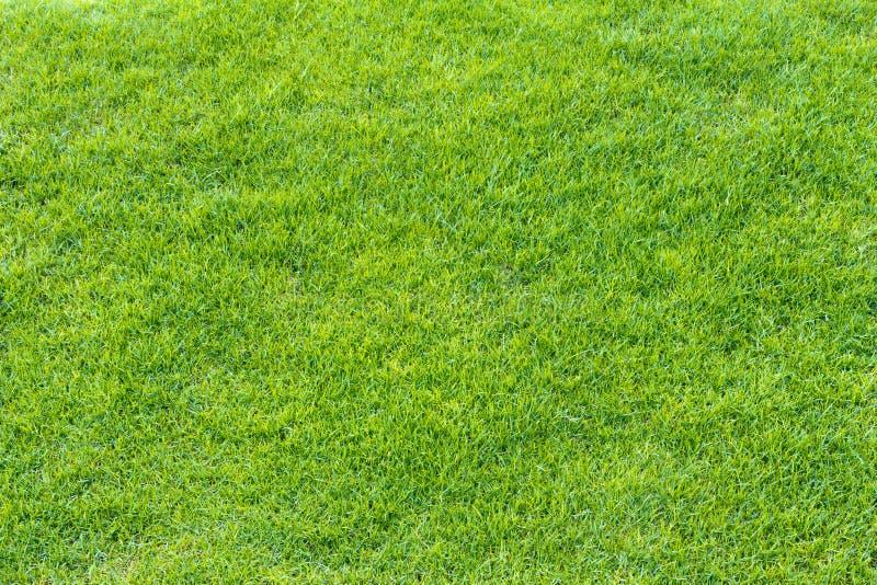 Ideia superior da textura da grama verde imagem de stock royalty free
