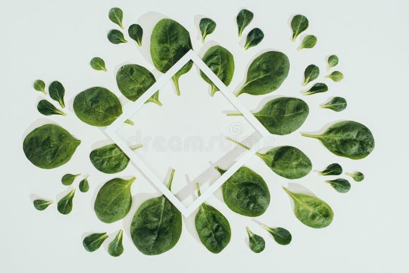 ideia superior das folhas verdes frescas bonitas dos espinafres e do quadro branco do rombo com espaço da cópia fotos de stock royalty free