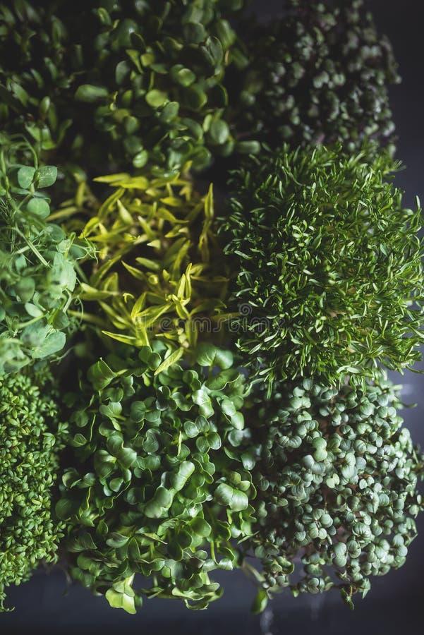 Ideia superior de microgreens misturados, close up foto de stock