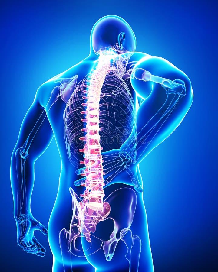 Ideia traseira da anatomia da dor nas costas masculina no azul ilustração stock