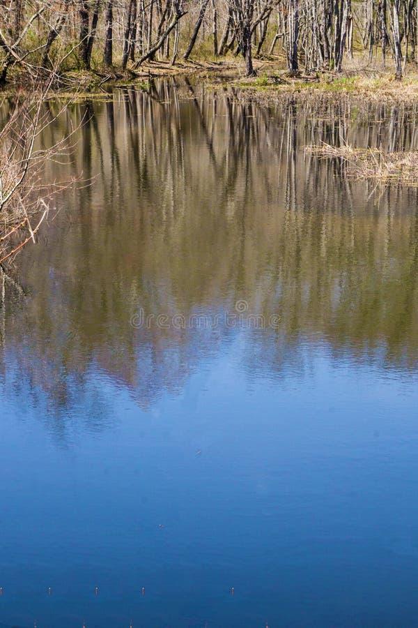 Ideia vertical das reflexões em um pântano da floresta fotos de stock