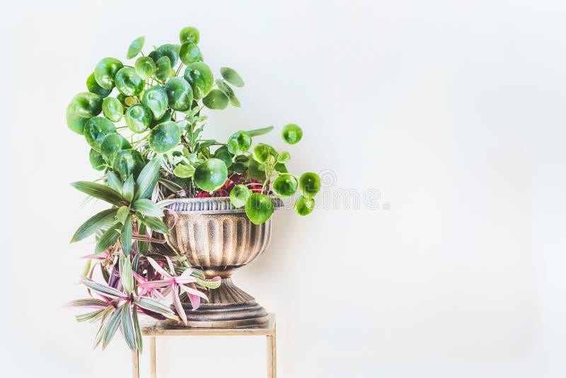 Ideias home verdes bonitas do interior e da decoração Plantador da urna com as plantas internas das tendências imagens de stock