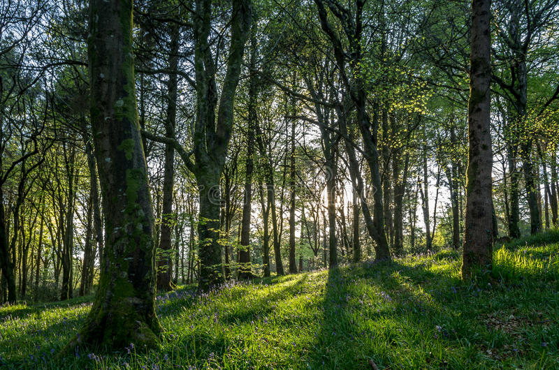 Ideless森林临近truro,英国英国 库存图片