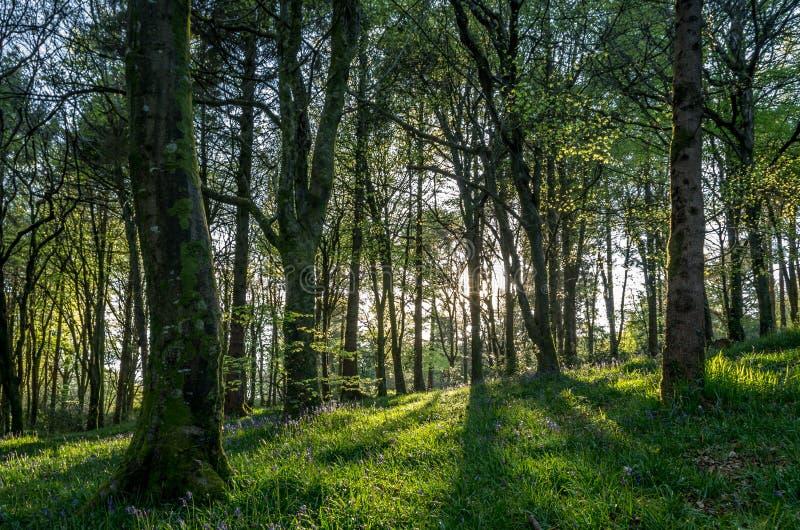Ideless-Holz nähert sich truro, England Großbritannien stockbild