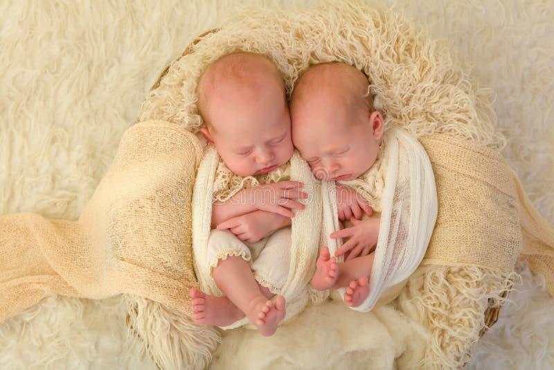 Identical newborn twins. Adorable newborn identical twin baby girls sleeping in a soft basket royalty free stock photo