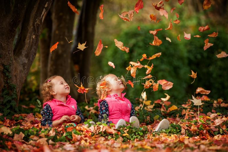 Identical twins having fun with autumn leaves in the park, blond cute curly girls, happy kids, beautiful girls in pink jackets. Healthy lifestyle, cheerful stock photo