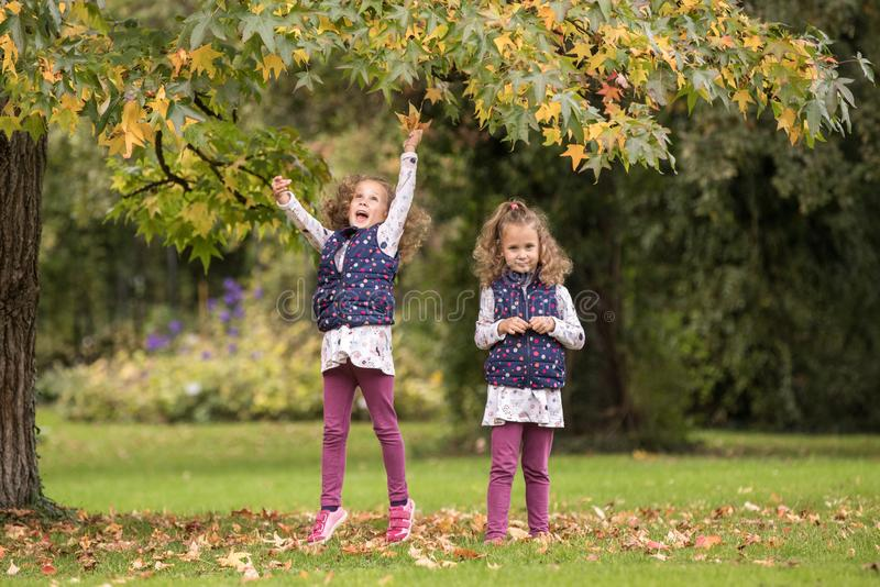 Identical twins having fun under tree with autumn leaves in the park, blond cute curly girls, happy family, beautiful girls in royalty free stock photography