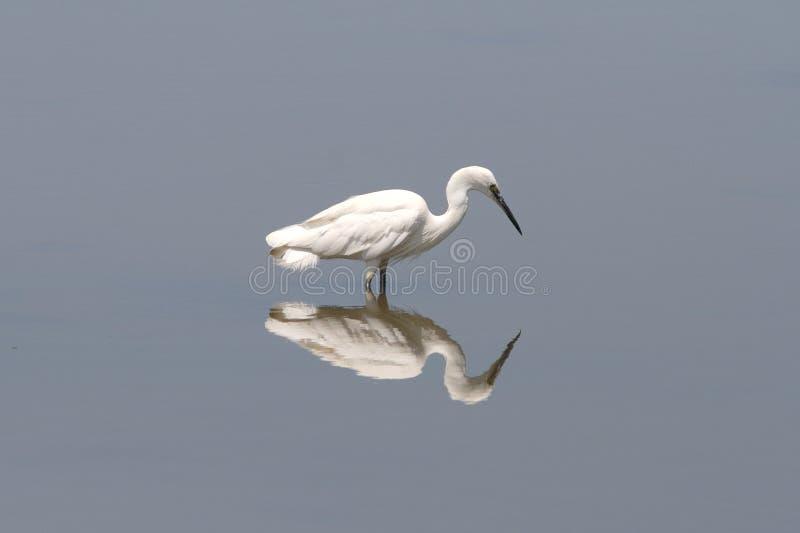 Identico e pazienza fotografia stock