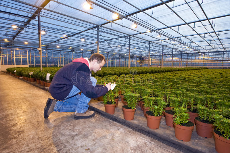 identyfikowanie rośliny obrazy royalty free
