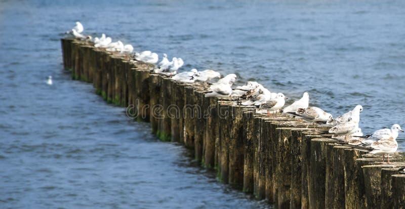 Idillio del Mar Baltico fotografie stock libere da diritti