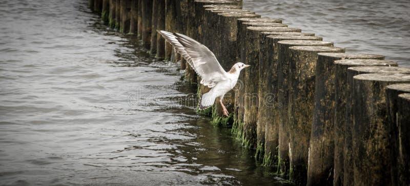 Idillio del Mar Baltico immagini stock libere da diritti