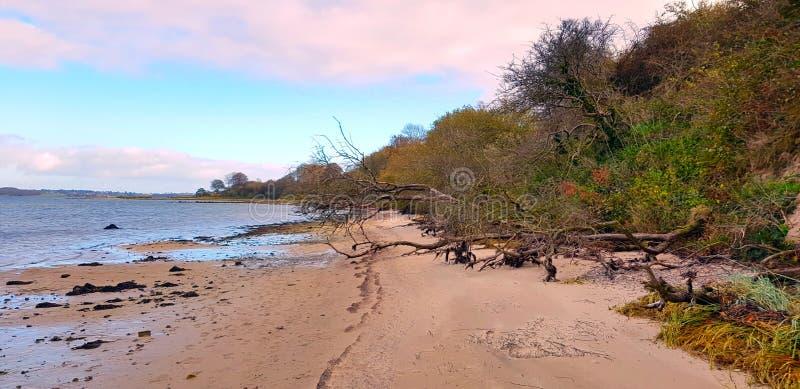 Idillio selvaggio della spiaggia fotografie stock libere da diritti