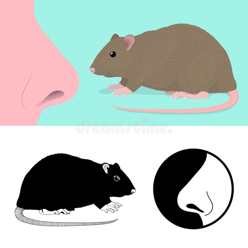 Download Idiom To Smell A Rat stock vector. Image of smell, pong - 22280426