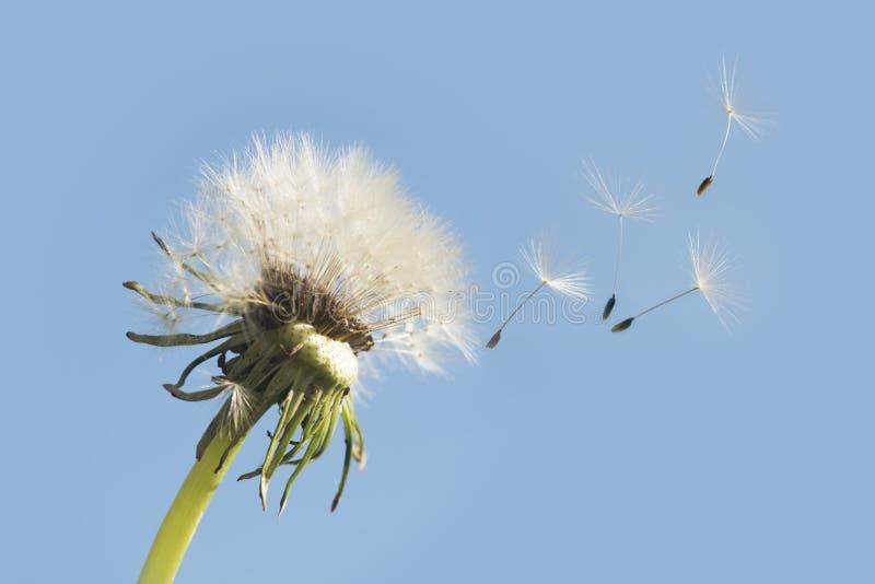 Ido con el viento imagenes de archivo