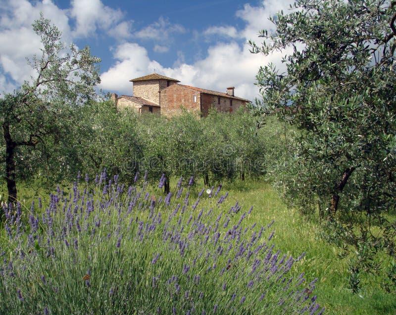 Idyll de Tuscan fotografia de stock