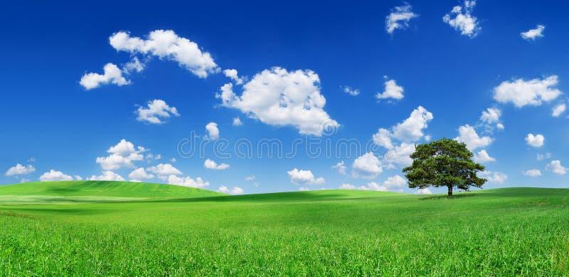 Idyll ensamt träd bland gröna fält arkivfoto